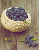 Heckenkirsche Beeren — Stockfoto