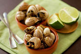 Snails with Garlic Butter — Stock Photo