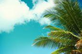 Palm leaf tree branch on blue sky background — Stock Photo