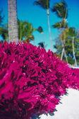 Pohled na pěkné tropické růžové barevné pozadí s kokosovými palmami — Stock fotografie