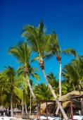Tropical summer beach with palm leaf tree branch  sea and sky background — Stock Photo