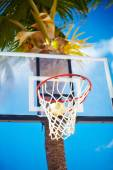 Basketball board ring on summer day on blue sky and green tree palm background — Stockfoto