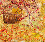 Autumn collage with Chinese crabapple — Stock Photo