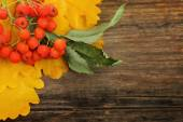 Rowan leaves and berries — Stock Photo