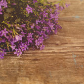 Beautiful floral background with flowers — Stock Photo