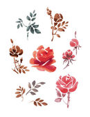 Set of watercolor flowers and leaves. Roses on a white background. — Stock Vector