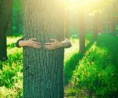 Yaz park veya orman içinde ağaç gövde sarılma eller — Stok fotoğraf