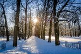 Winter sun in park — Stock Photo