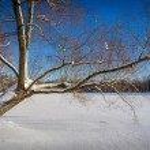 Whinter tree at lake — Stock Photo #64681079