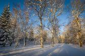 Foresta d'inverno al tramonto — Foto Stock
