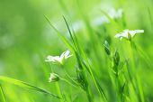 Beautiful daisy flowers — Stock Photo