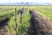 Washington Berry Farm — Stock Photo