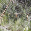 Spider Waits for Victim — Stock Photo #55497745