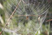 Spider Waits for Victim — Zdjęcie stockowe