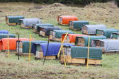 Hive Wraps — Stock Photo