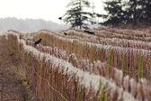 Washington Winter Fruit Crop — Stock Photo