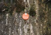 Tree Tag — Stock Photo