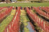 Community Crop Trimming — Stock Photo