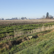 Pacific Northwest Agricultural Landscape — Stock Photo #67515987