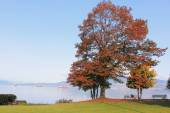 Vancouvers Point Grey District — Stock Photo