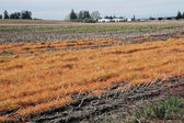 Dormant Washington Agricultural Land — Stock Photo
