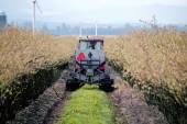 Washington State Farmer and Blueberry Crop — Stock Photo