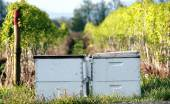 Rented Washington Bee Boxes — Stock Photo