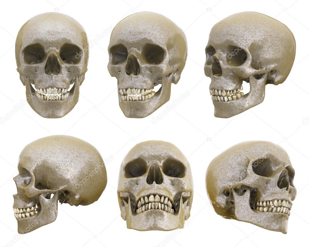 Cr neo humano desde diferentes ngulos foto de stock for Fotos de diferentes marmoles