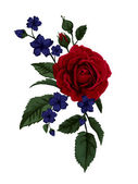 Rose isolated on white with blue flowers. — Vector de stock