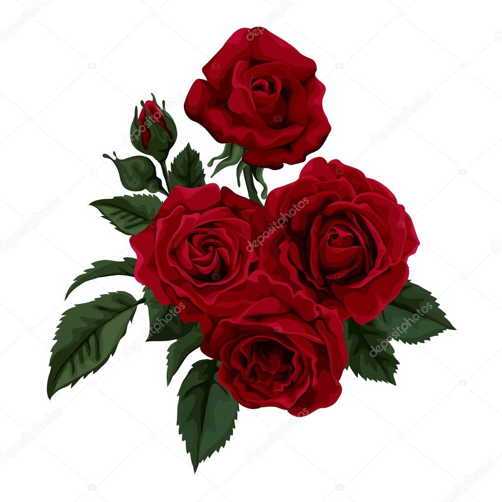 Red rose isolated on white Perfect for background greeting cards – Greeting Cards and Invitations