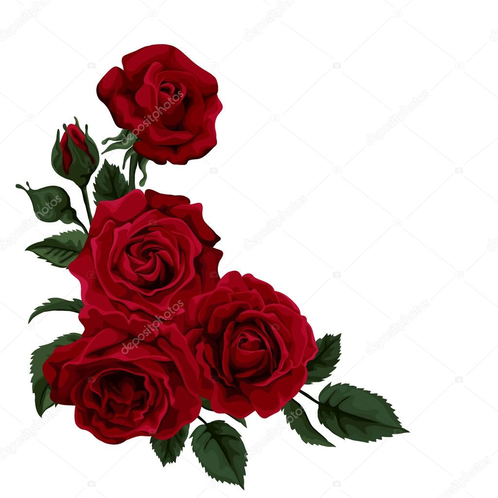 Beautiful rose isolated on white Perfect for background greeting – Greeting Cards and Invitations