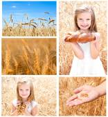 Collection of photos wheat field and little girl  — Stock Photo