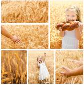 Collection of photos wheat field and little girl — Stok fotoğraf