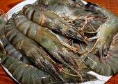 Fresh shrimp king size — Stock Photo