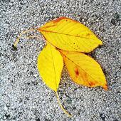 Yellow leaves on concrete — Stock Photo