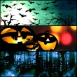 Halloween horizontal symbols - pumpkin bats forest background — Stock Photo #54291253