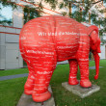 Постер, плакат: Red elephant
