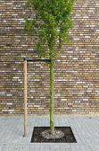 Young tree — Stock Photo