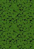 Background from the scattered randomly leaf clover — Stock Photo
