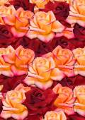 Background from the scattered randomly, yellow and red roses — Stock Photo