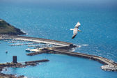 Sea gull at port of Castelsardo, Sardinia, Italy — Stock Photo