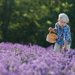 Cute little boy with basket in lavender field — Stock Photo #65630597