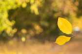 Two yellow leaves joined together creating — Stock Photo