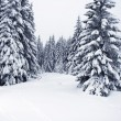 Beautiful landscape of the boreal forest on a cold winter day with coniferous trees covered with snow. — Stock Photo #65145543