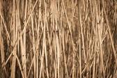 тростника сухой фон — Стоковое фото