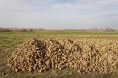 Sugar industry — Stock Photo