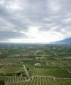 Vines near Laguardia, Spain — Stock Photo