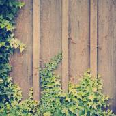 Ivy Wall Frame — Stock Photo