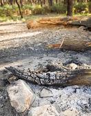 Charcoal Wood — Stock Photo