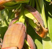 Banana Plantation — Stock Photo